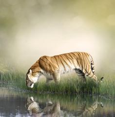 Tiger Near Pond