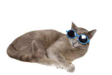 Simpatico gatto con occhiali da sole