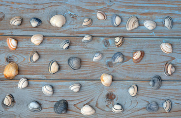 old wooden blue grey background with sea shells