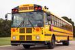 Public school bus - 81631408