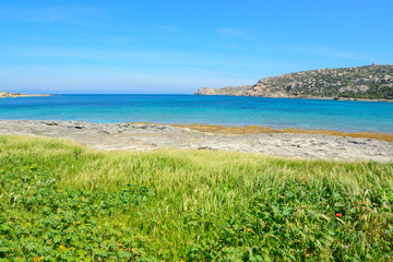 green vegetation by the sea in Gallura