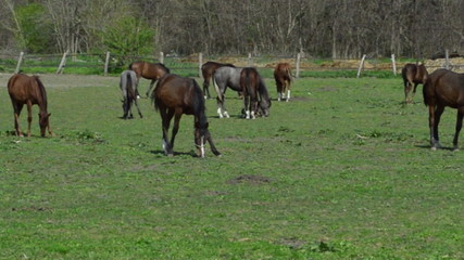 Group of horses eating grass in a field