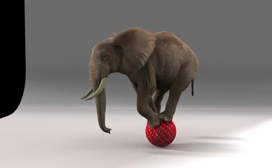 Elephant on sphere.