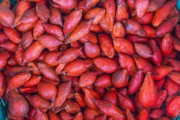Zalacca tropical fruit