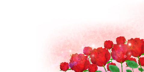 バラ 花 背景