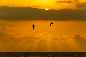 Ocean Sunset Sky Clouds Peacful Flying Birds
