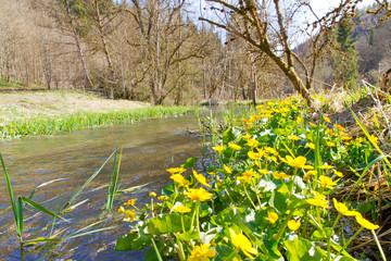 Frühling im Lautertal bei Hayingen auf der schwäbischen Alb