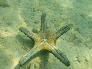 Thailand Koh Mak Island  Sea Star Fish