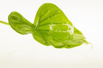 fresh water splash on leaves