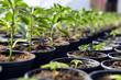 Small plant sapling - 81651685