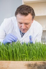 Scientist examining grass