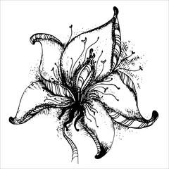 Graphic hand drawn vector flower.