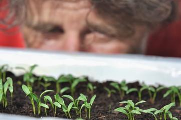 semis dans bac et homme les observant en fond
