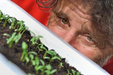 homme observant des semis