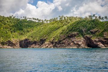 Coconut tree on Phangan island