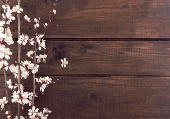 Blooming apricot on rustic wooden background. Spring background