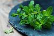 Leinwanddruck Bild - Fresh green mint