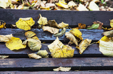 Wooden bench covered with yellow leaves