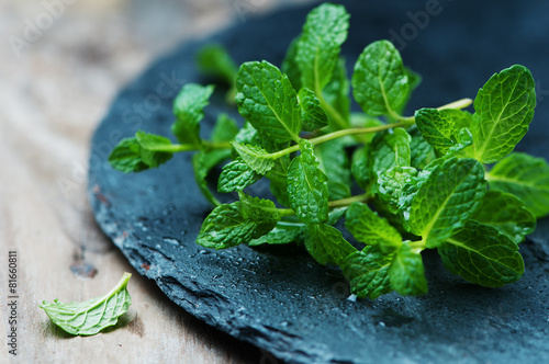 Fresh green mint - 81660811