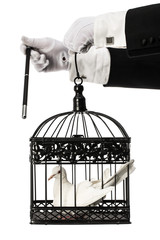Magician trick Dove inside cage