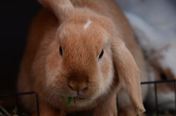 Haustier: Kaninchen