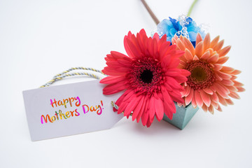 Studio macro of mother's day flowers with soft shadows against a