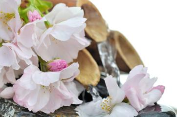 fleurs de cerisier devant fontaine