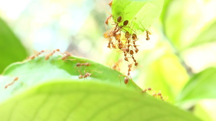 Ants are walking on a leaves
