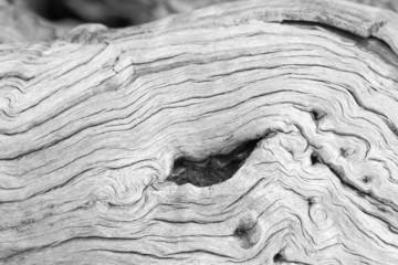 vieille souche de bois blanchie par les ans