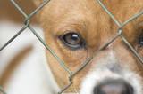 Dog behind wire mesh