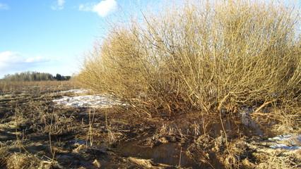 Round willow bush