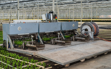 Planting machine in a chrysanthemum nursery