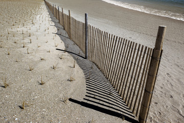 strengthening marine sandy coastal zone