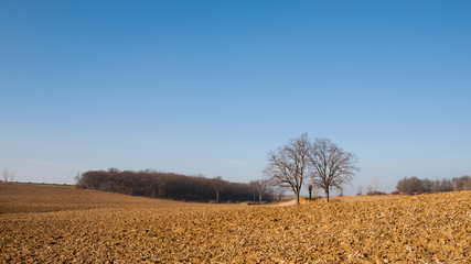 Plowed fields and blue sky