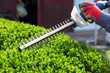 Cutting a hedge with electrical hedge trimmer. Selective focus - 81681672