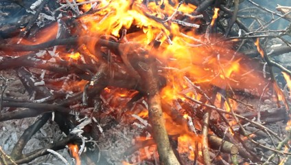 burning branches, forest fire