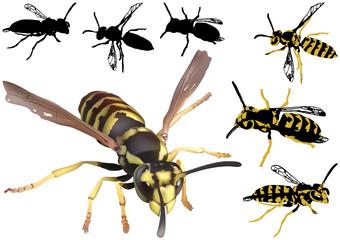 Common Wasp Set