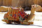 Camel sit