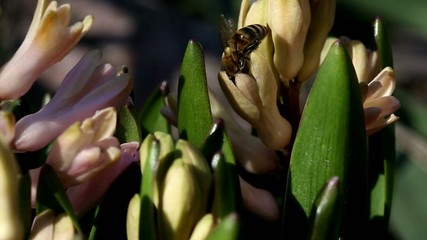 Bees collect nectar.