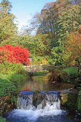 Lukesland Gardens, Devon