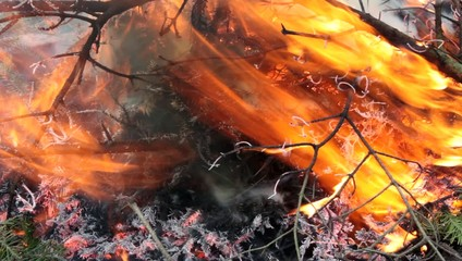 forest fire, the sight of burning branches