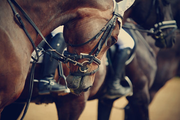 Sports horses before competitions.