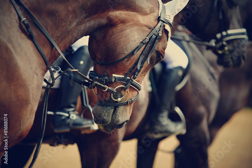 Foto op Plexiglas Paardensport Sports horses before competitions.