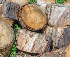 Heap of old cut tree trunks