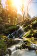 Leinwandbild Motiv River deep the forest