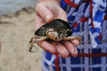 Small crab in hand