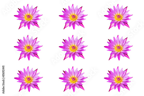 Fotobehang Water planten collection pink water lily isolated on white background