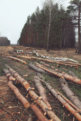 Environment, nature and deforestation forest concept