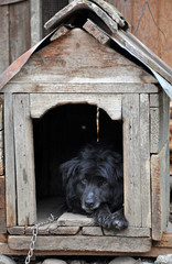 Dog in the dog house
