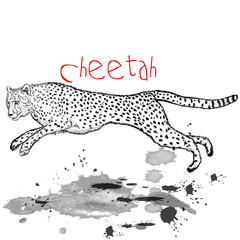 Cheetah animal jump with ink spots
